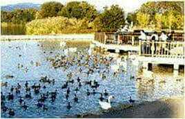 昆陽池公園