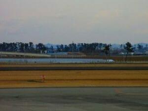 仙台空港からみた風景:松林の先に海