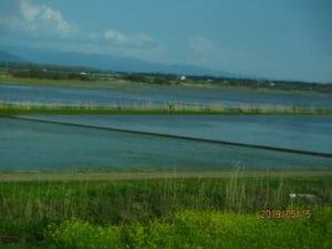 八郎潟の水田