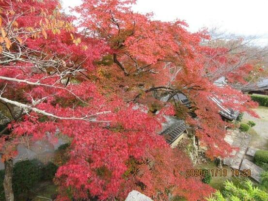 西教寺の紅葉