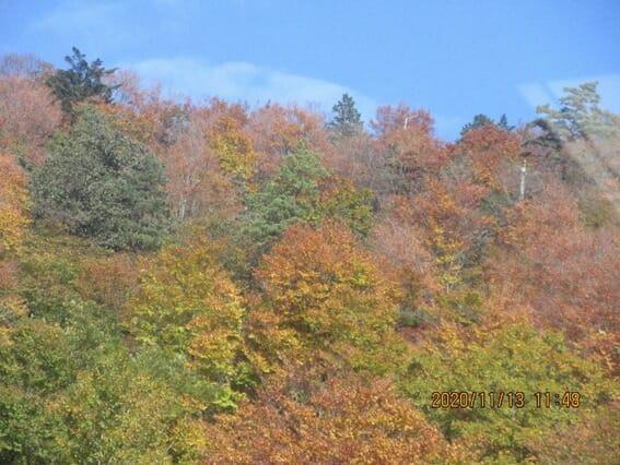 琵琶湖バレーの紅葉